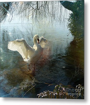 A Very Fine Swan Indeed Metal Print by LemonArt Photography