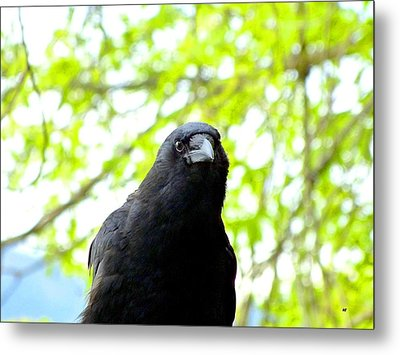 A Very Tame Crow Metal Print