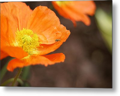 Metal Print featuring the photograph A Visitor by Heidi Poulin