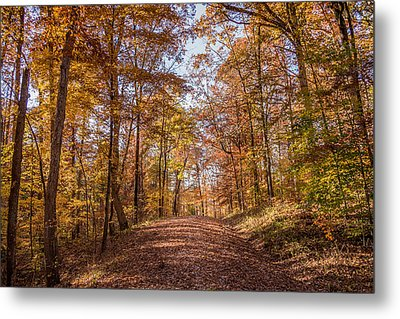 A Walk In The Woods Metal Print by Andrea Kappler