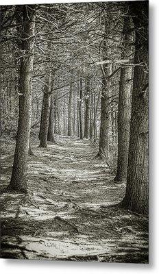 A Walk In Walden Woods Metal Print by Ike Krieger