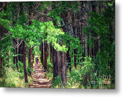 A Walk Into The Forest Metal Print by Tamyra Ayles