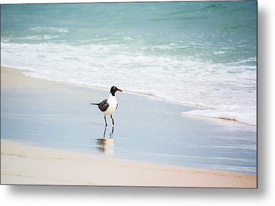 A Walk On The Beach Metal Print by Shelby  Young
