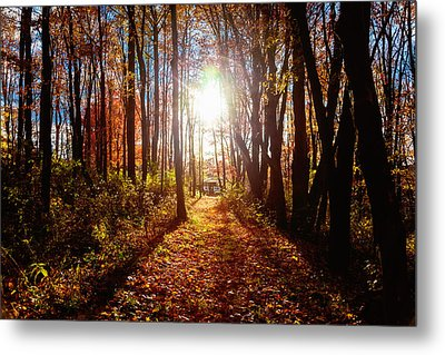 Metal Print featuring the photograph A Walk To Grandma's by April Reppucci