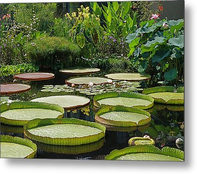 Metal Print featuring the photograph A Water Garden by Byron Varvarigos