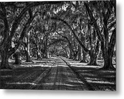 The Majestic Way Live Oaks Tomalley Plantation South Carolina Metal Print by Reid Callaway