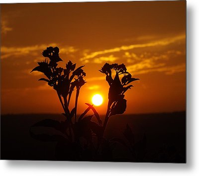 A Weed Sunset Metal Print by Rebecca Cearley