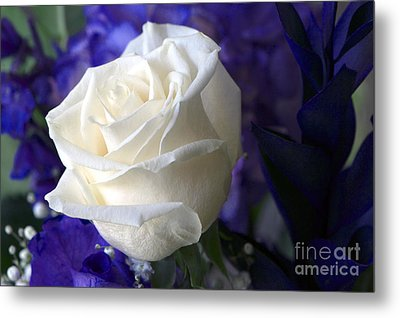 A White Rose Metal Print by Sharon Talson
