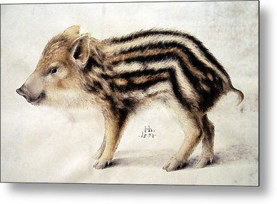 A Wild Boar Piglet Metal Print by Hans Hoffmann