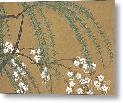 A Willow And Cherry Blossoms Metal Print