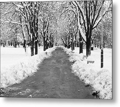 A Winter's Path Metal Print by Rae Tucker