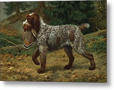 A Wire-haired Pointing Griffon Holds Metal Print by Walter A. Weber