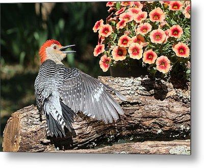 A Woodpecker Conversation Metal Print by Sheila Brown