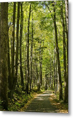 A Woodsy Trail Metal Print by Wanda Krack