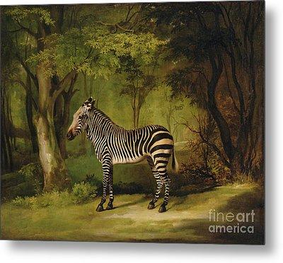 A Zebra Metal Print by George Stubbs