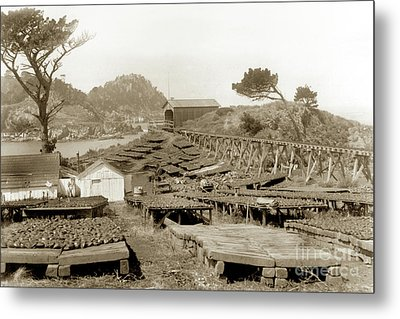 Abalone Drying Racks On Coal Chute Point Sept 19, 1905 Metal Print