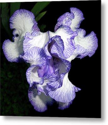 Above A Purple Edged Iris Metal Print by Tara Hutton