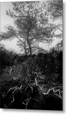 Above And Below Metal Print by Joseph Smith
