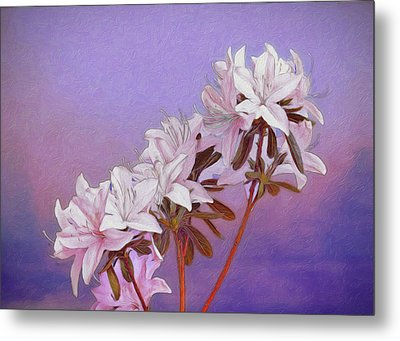 Abstract Azaleas Metal Print by Tom Mc Nemar