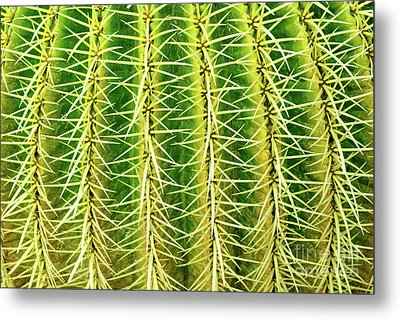 Abstract Cactus Metal Print by Delphimages Photo Creations