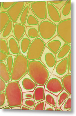 Abstract Cells 2 Metal Print by Edward Fielding