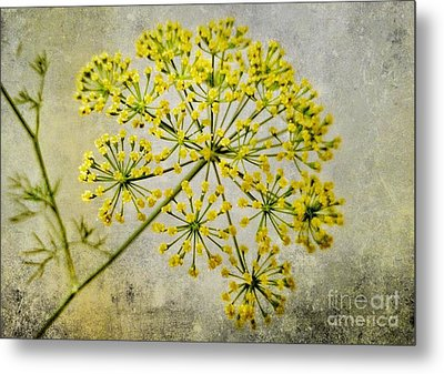Attractive Dill Blossom  Metal Print