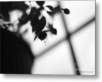 Abstract Flowers Metal Print by Todd A Blanchard
