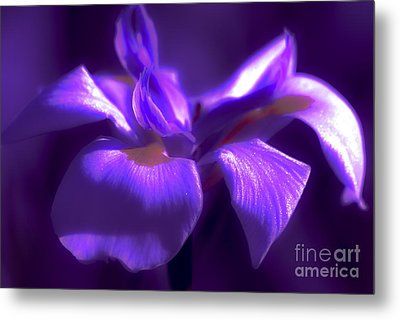 Abstract Iris Metal Print