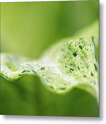Abstract Leaf Metal Print by Julie Rideout