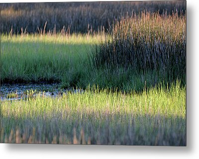Metal Print featuring the photograph Abstract Marsh Grasses by Bruce Gourley