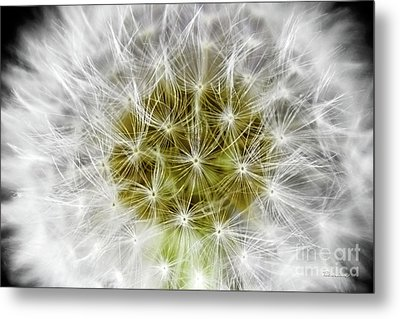 Abstract Nature Dandelion Floral Maro White And Yellow A1 Metal Print