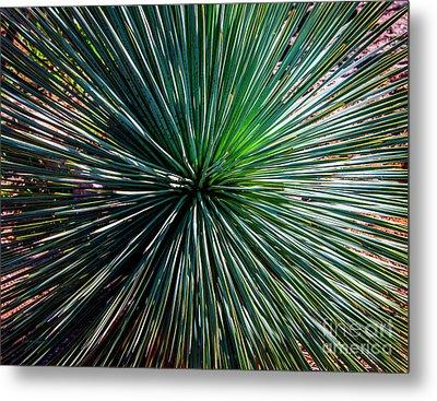 Abstract Nature Desert Cactus Photo 207 Blue Green Metal Print