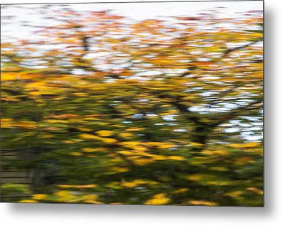 Abstract Of Maple Tree Metal Print