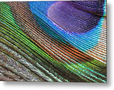 Abstract Peacock Feather Metal Print by Angela Murdock