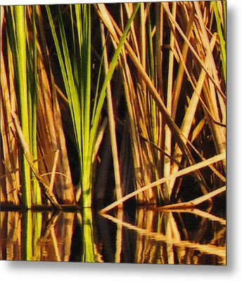 Abstract Reeds Triptych Top Metal Print by Steven Sparks