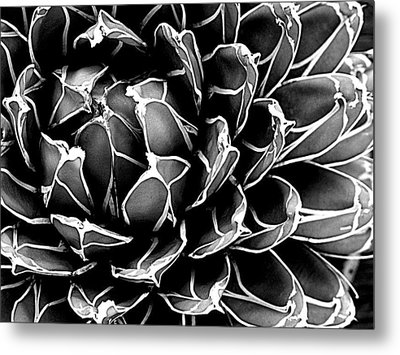 Abstract Succulent Metal Print by Ranjini Kandasamy