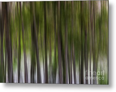 Abstract Trees Murfree Spring Wetlands Metal Print by Photo Captures by Jeffery