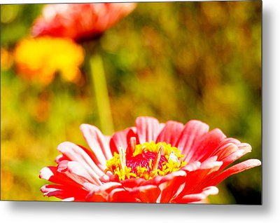 Abstract Zinnia Metal Print by Beth Collins