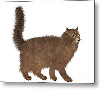 Abyssinian Cat Metal Print by Corey Ford