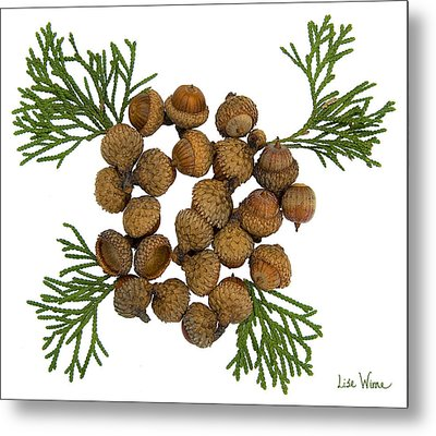 Acorns With Cedar Metal Print by Lise Winne