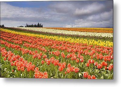 Across Colorful Fields Metal Print by Mike  Dawson