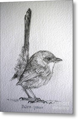 Adolescent Blue Wren Metal Print by Sandra Phryce-Jones