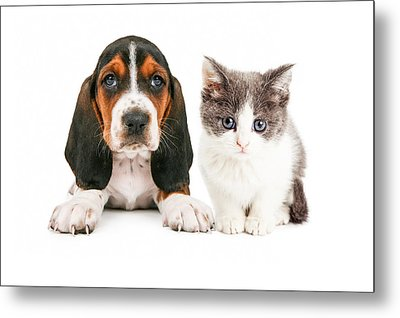 Adorable Basset Hound Puppy And Kitten Sitting Together Metal Print