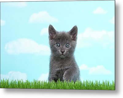 Adorable Grey Kitten Summer Day Metal Print by Sheila Fitzgerald