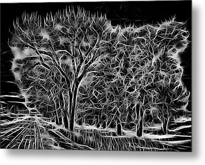 Advent Trees Metal Print by Aliceann Carlton