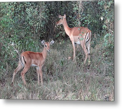 Africa - Animals In The Wild 2 Metal Print by Exploramum Exploramum