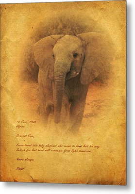 African Elephant Metal Print by John Wills