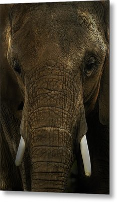 Metal Print featuring the photograph African Elephant by Michael Cummings