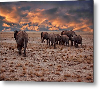 African Elephants Metal Print