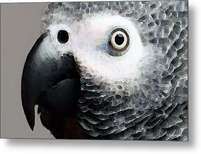 African Gray Parrot Art - Softy Metal Print by Sharon Cummings